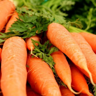 Best vegetables to juice carrot