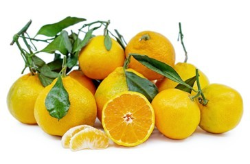 Satsuma Oranges - Good type of orange